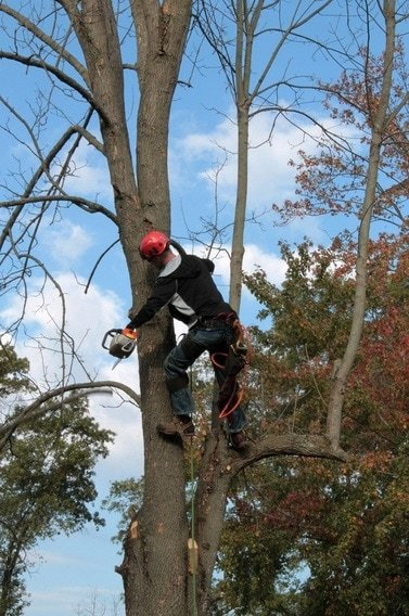 tree trimming mobile al